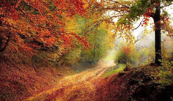 Nadeszła jesień…